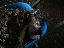 Mousetrap in wbarrow