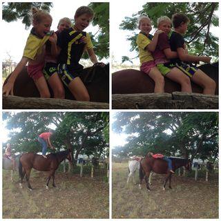 BHJ horses collage