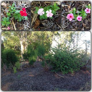 Garden collage hill