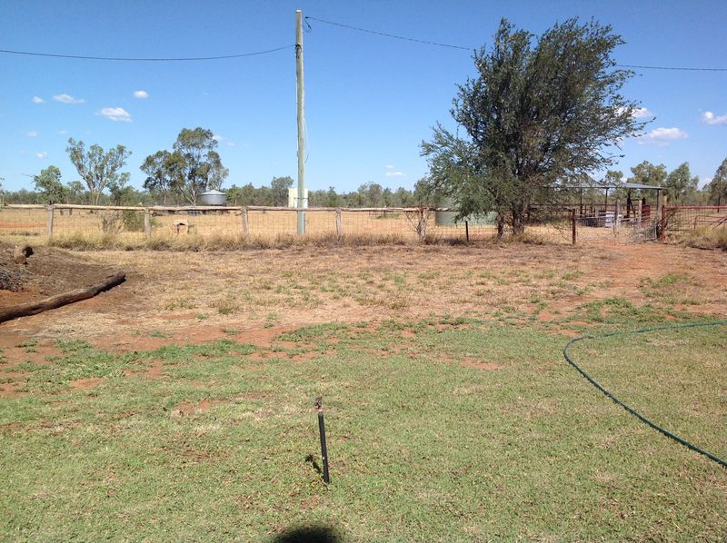 Buffel grass tamed